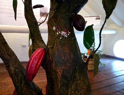 flor de cacao