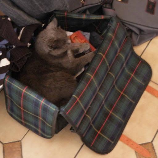 http://lh6.ggpht.com/_Af2NJS5Y8NA/S7rz_-M8nBI/AAAAAAAADvc/wy8-J0nLnoo/s512/bagage.jpg