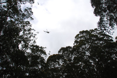 A helicopter searching in the bush near Mt Sabine Road