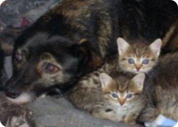 фото 21 марта - Поможем животным вместе