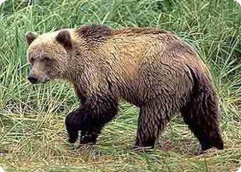 Управлению охотопользования и рыболовства Департамента управления природными ресурсами Тверской области 3 года