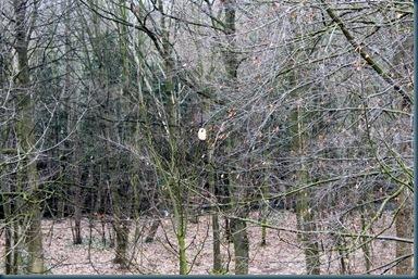 野鳥の来る木