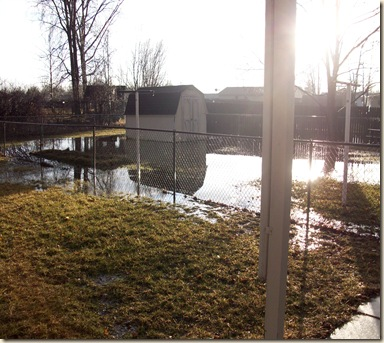 flooded  back yard 015