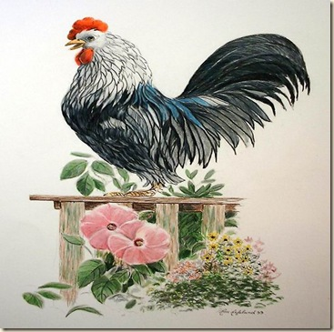 Rooster-Poppy-A-18