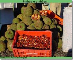 Pinhoes