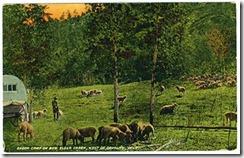 sheepcmpdaniel10