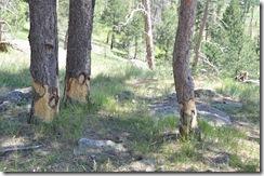 Wyoming 2009 104