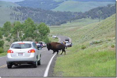 Yellowstone 2009 020