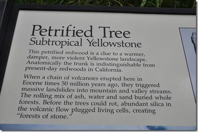 Yellowstone 2009 096