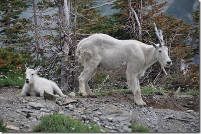Glacier National Park 2009 135