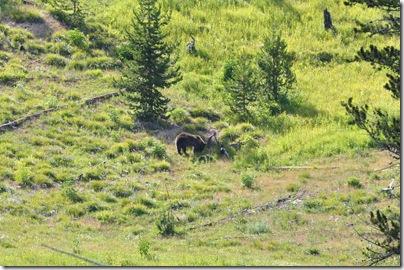 Yellowstone 2009 004