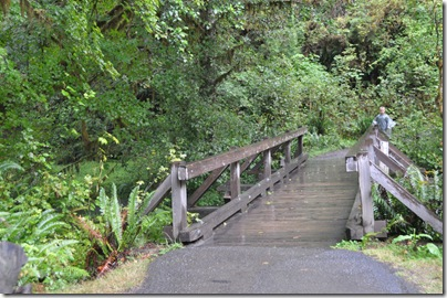 Hoh Rain Forest 093