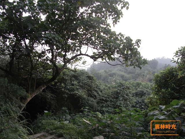 林內- 坪頂 ● 龍過脈步道四 │景點