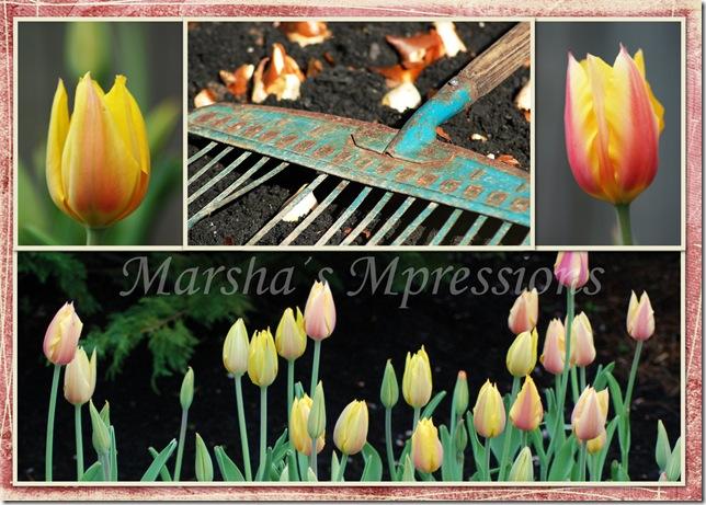 planting tulips w wartermark