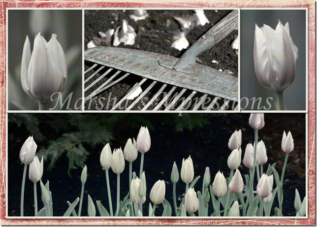 planting tulips with texture white w letters and satuation copy copy w watermark