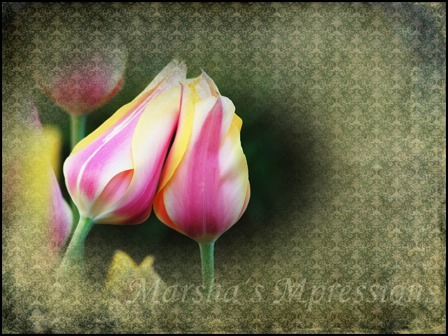 two tulip friends edited w watermark