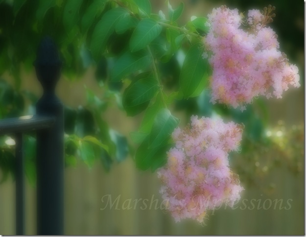 pink crepe myrtle blurred copy w watermark