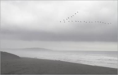 Beachcomers - Seagalls 1200px IMG_1065