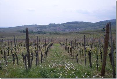 vigneti lungo la route des vins
