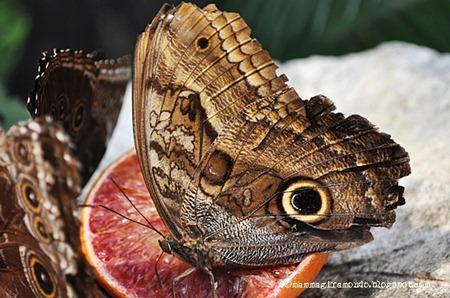 casa delle farfalle (5)
