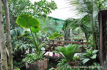 Casa delle farfalle (4)