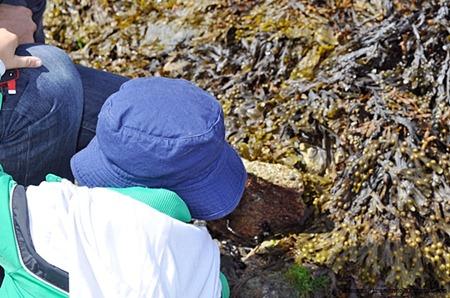 Bassa marea a St Michael's MountDSC_0099