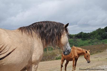 cavalli nella new forestDSC_0908