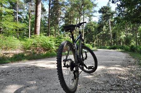 New forestDSC_0960
