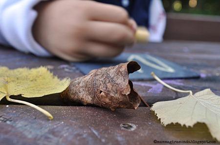 autumnDSC_0991