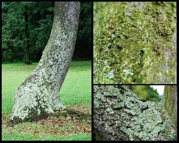Trees collage copy 2