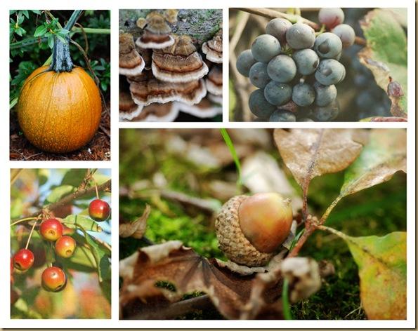 Autumn Collage 2 copy 2