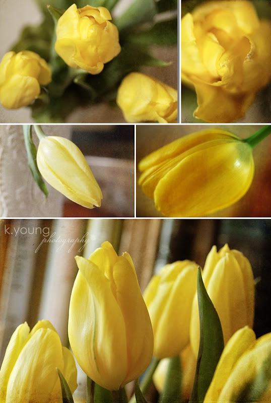 Yellow Tulips copy 2