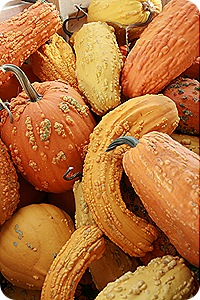 Daisy Month 19_pumpkinpatching 015