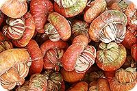 Daisy Month 19_pumpkinpatching 017