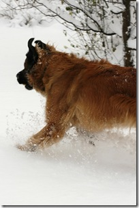 Lovis i snö 2