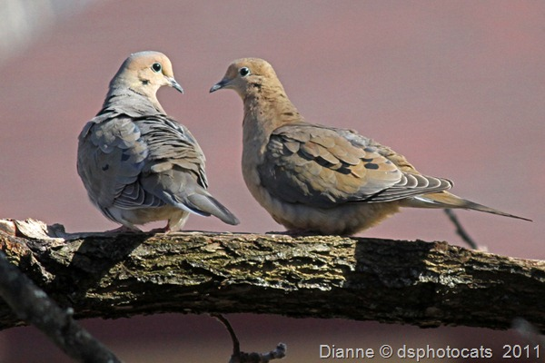 IMG_2267 Love Birds_812