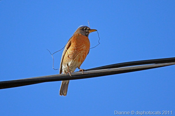 IMG_2640 Bird On A Wire