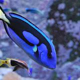 Fisch-in-der-Wilhelma-a18309427.jpg