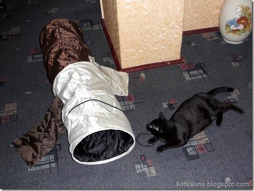 koty tunel