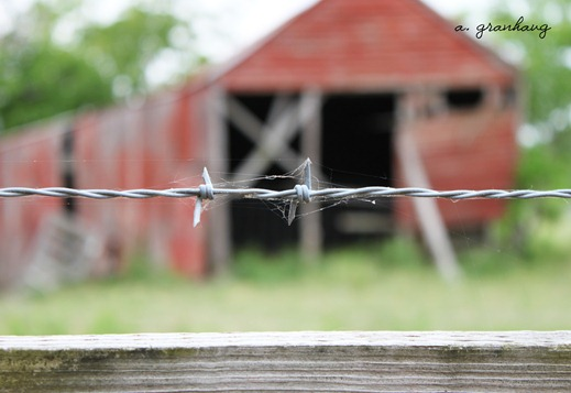 Barn barbed wire