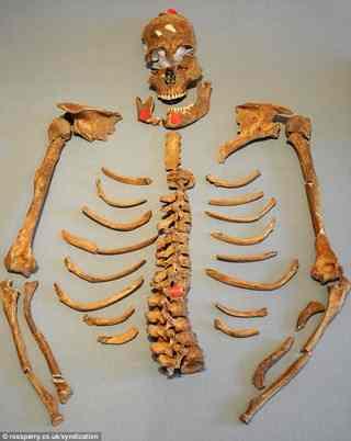 L'analyse d'un squelette à York Article-1337555-0C6E0741000005DC-8_634x796_thumb%5B3%5D