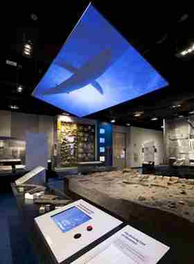 The Carmel Church exhibit shows off fossils of some of the earliest marine animals. Some are as old as 14 million years, and the exhibit shows what they would have looked like. 