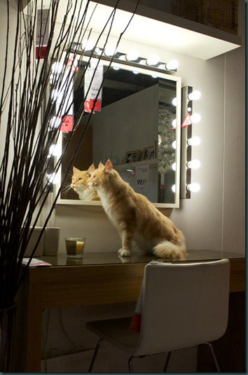 ikea-cat-mirror