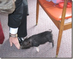 2010 Domestic Baby Pig Pres Tucker