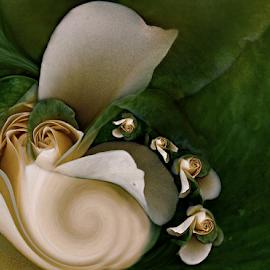 SHELL FLOWER by Carmen Velcic - Digital Art Abstract ( abstract, shell, green, roses, flowers, digital )