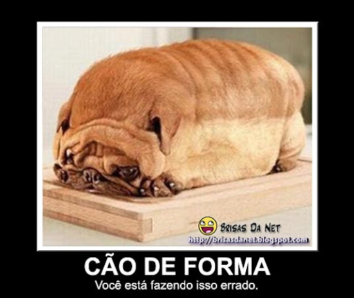 cão de forma