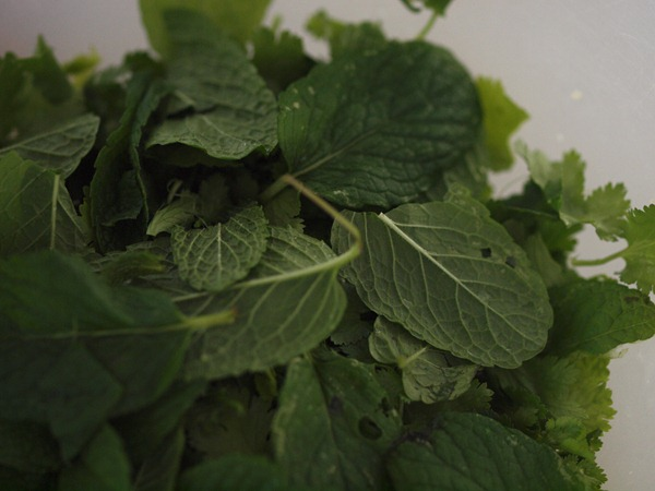 mint and coriander leaves