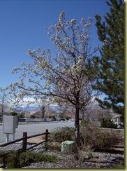 April 2010 173