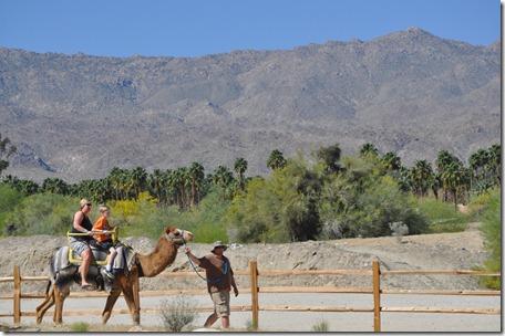 Living Desert, Ca 111