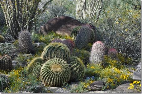 Living Desert, Ca 042